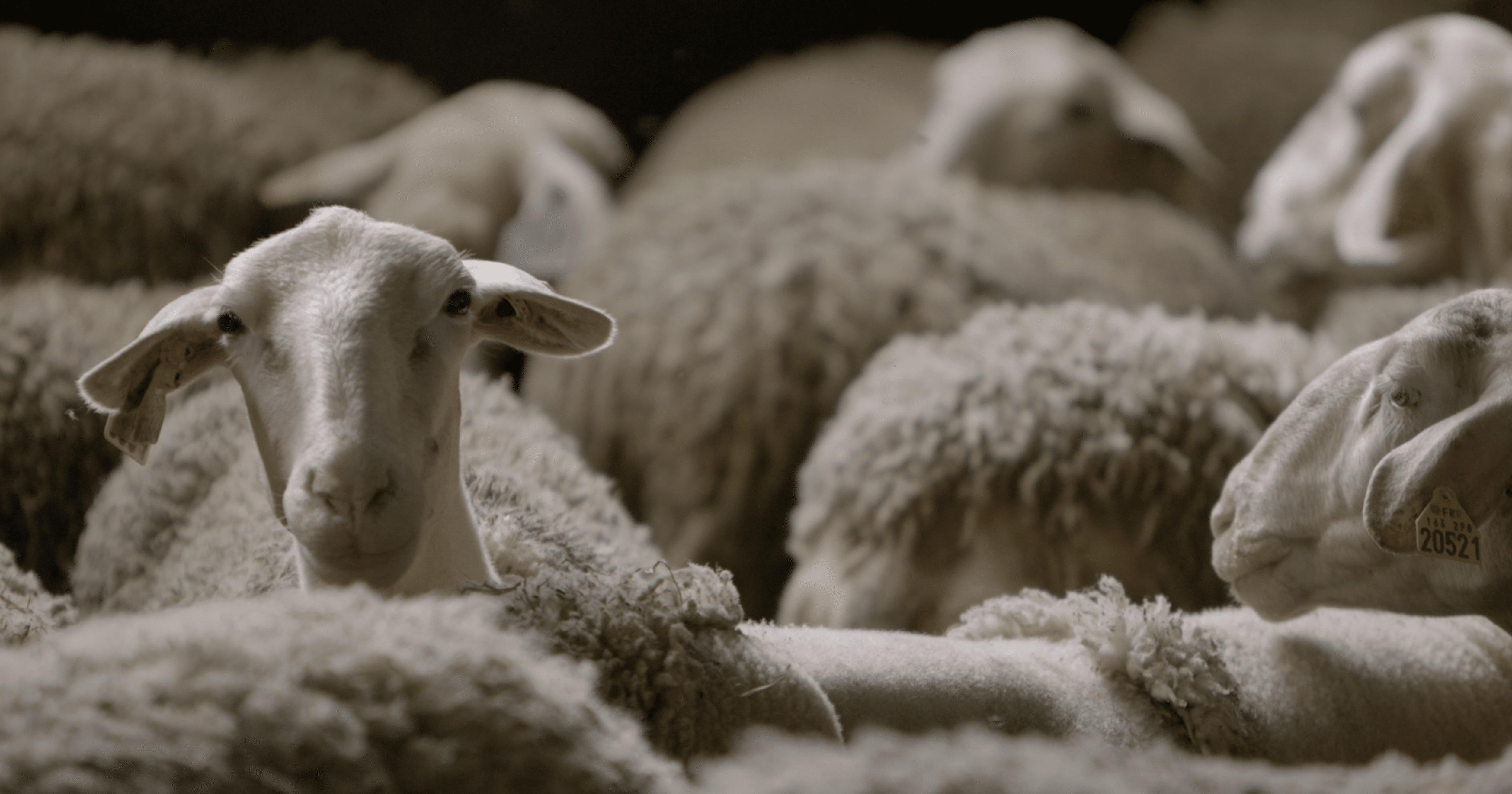 jayus-brand-content-production-atelier tuffery film laine