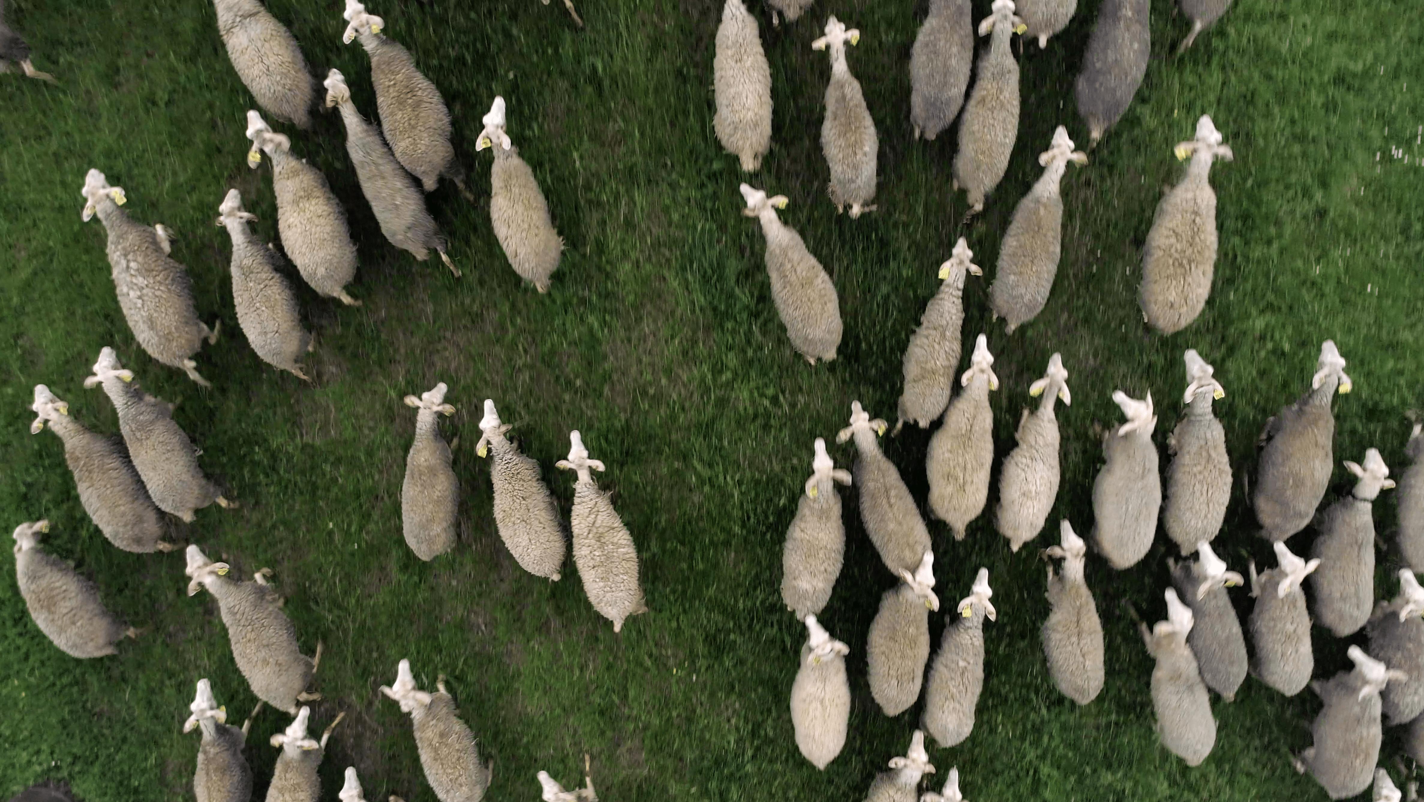 atelier tuffery webserie mouton pantalon laine docu jean denim made in france